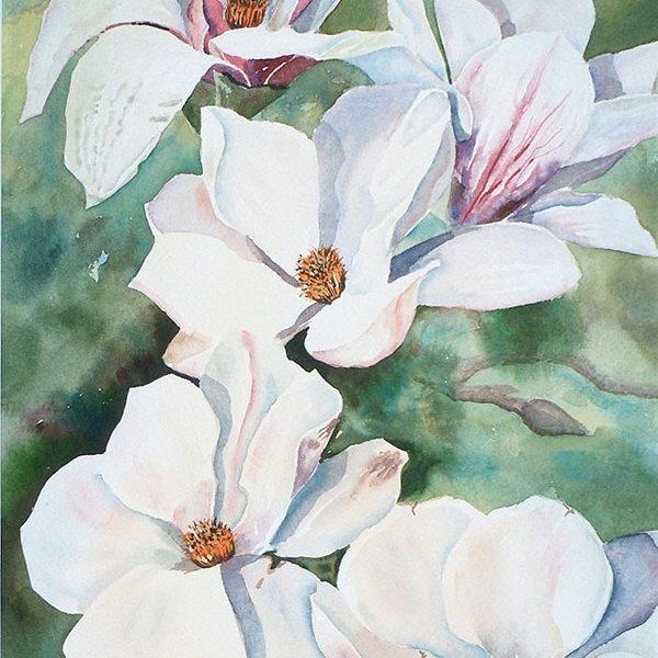 Sunny Magnolias - Original