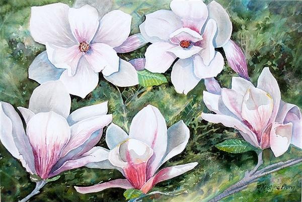 Midwest Magnolias – Original