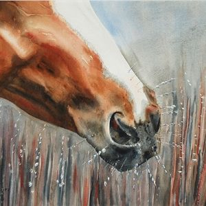 Horse Frost - Giclee Print Large