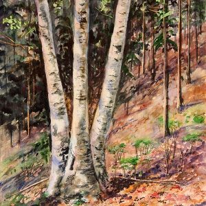 Hillside Birch - Giclee Print Large