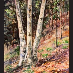 Hillside Birch Note Card